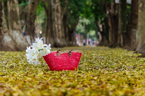 Mùa thu là thời điểm tốt nhất để bạn khám phá 36 phố phường Hà Nội